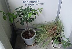 台風201809045