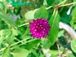 花18252