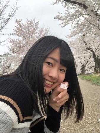 足羽川桜並木2