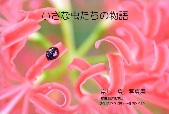 敷島珈琲店DM
