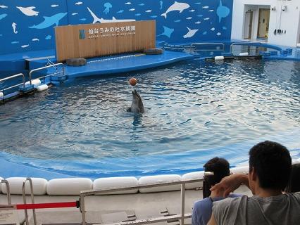イルカの球遊び