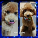 PhotoGrid_1526294495767.jpg