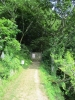 20180725_岡田の谷の半夏生園05