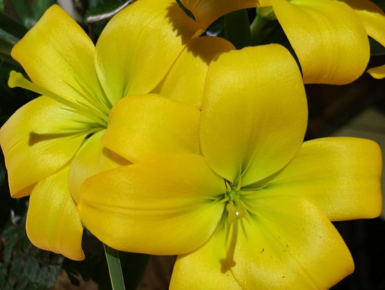 香露軒で綺麗な黄色い花 30 8 16
