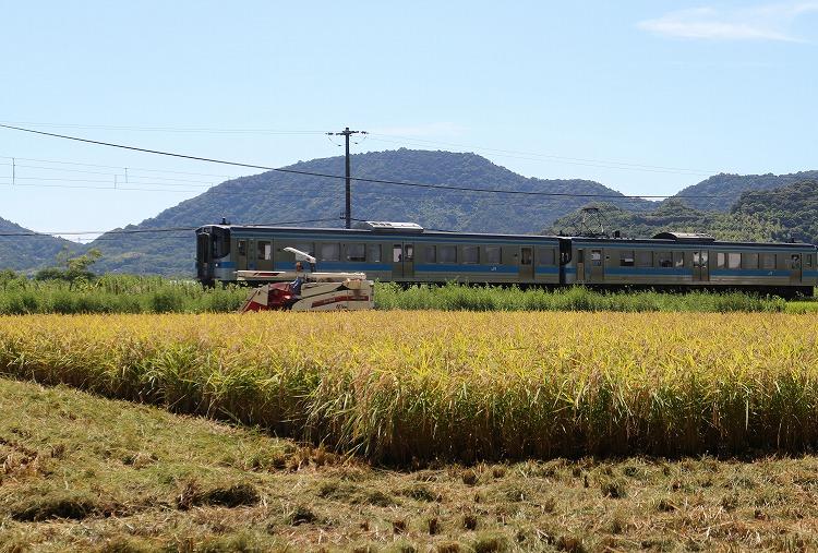 稲刈りを電車も応援 30 8 26