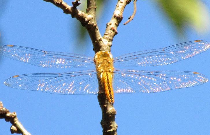 青空に蜻蛉 30 9 28