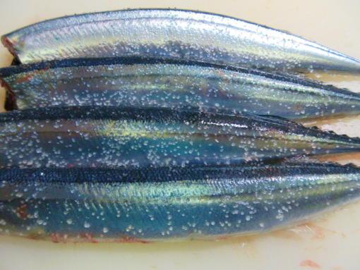 211  秋刀魚に塩(1)