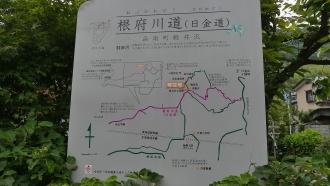 20170610原生の森018