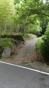 20170610原生の森022