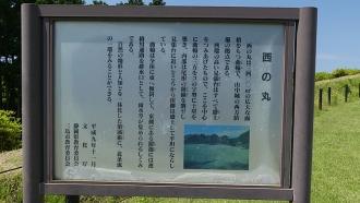 20170610原生の森079