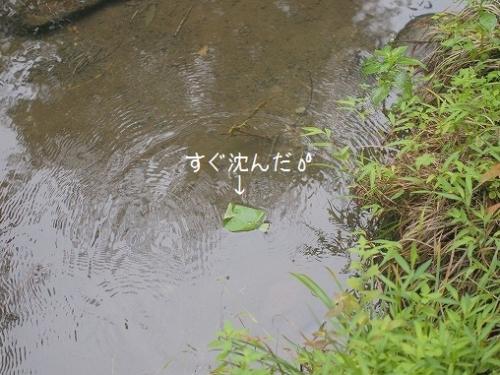 P9015388.jpg