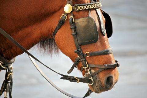 馬 目隠し