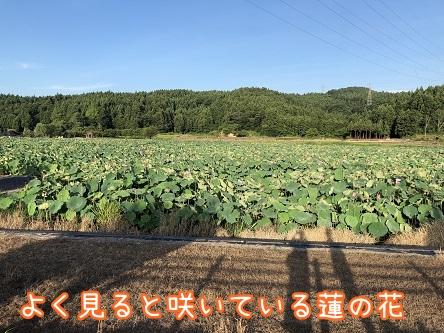 kinako10104.jpeg