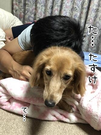 kinako10143.jpeg