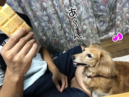 kinako10145.jpeg
