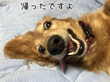 kinako10148.jpeg