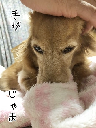 kinako10151.jpeg