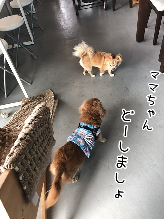 kinako10176.jpeg