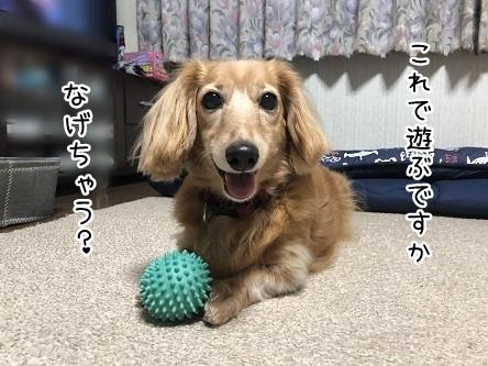 kinako10184.jpeg