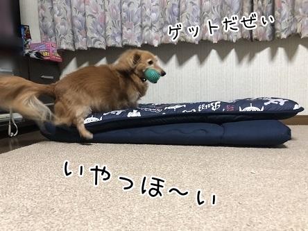kinako10185.jpeg