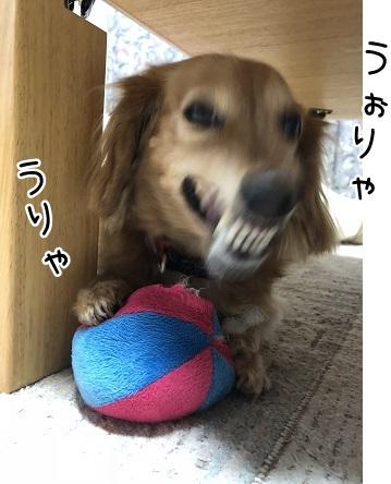 kinako10193.jpeg