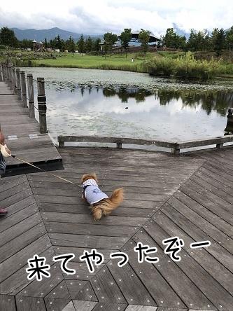 kinako10208.jpeg