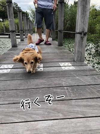 kinako10210.jpeg