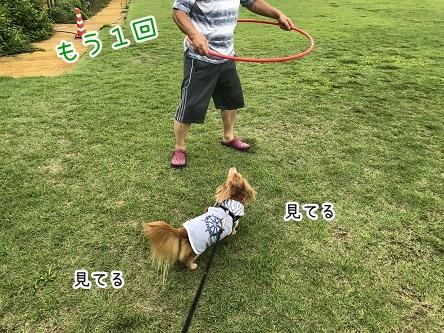 kinako10216.jpeg