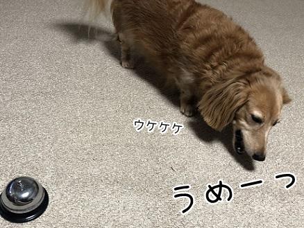 kinako10230.jpeg