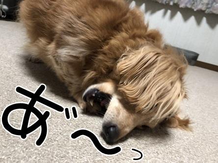 kinako10235.jpeg