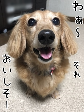 kinako10241.jpeg