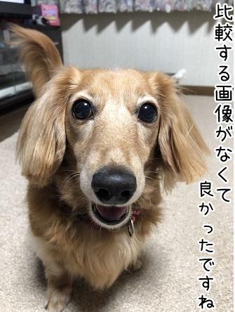kinako10260.jpeg