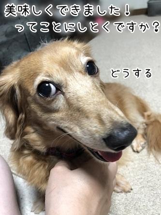kinako10261.jpeg