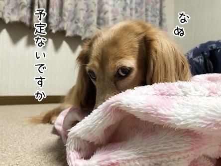 kinako10274.jpeg