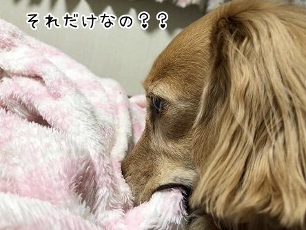 kinako10276.jpeg