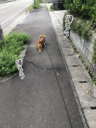 kinako10320.jpeg