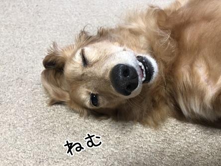 kinako10321.jpeg