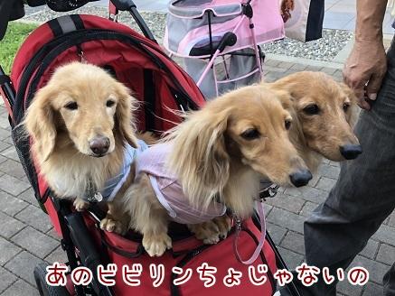 kinako10325.jpeg