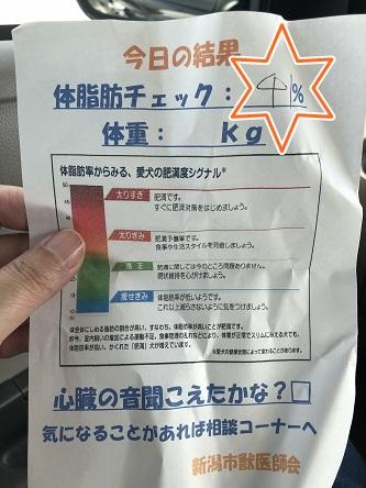 kinako10329.jpeg