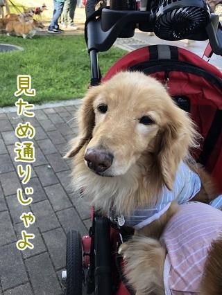 kinako10330.jpeg