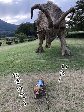 kinako10338.jpeg