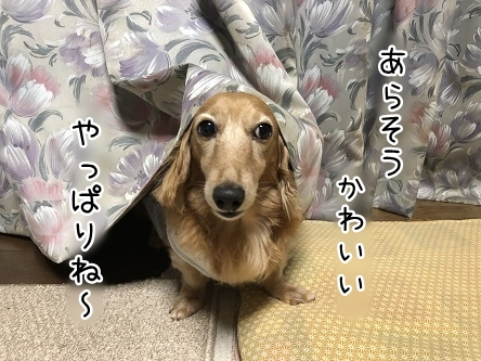 kinako10349.jpeg