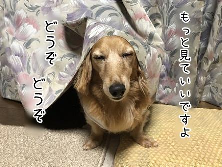 kinako10350.jpeg