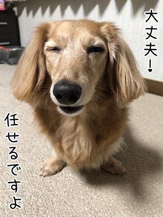 kinako10358.jpeg