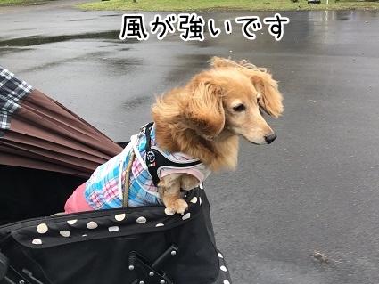 kinako10364.jpeg