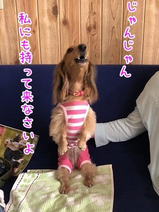 kinako10381.jpeg