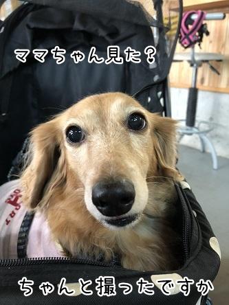 kinako10383.jpeg