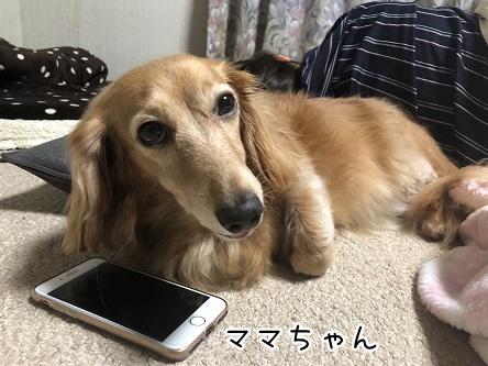 kinako10396.jpeg