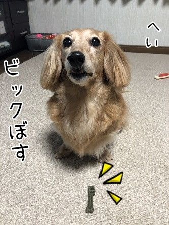 kinako10402.jpeg