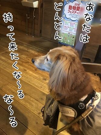 kinako10413.jpeg